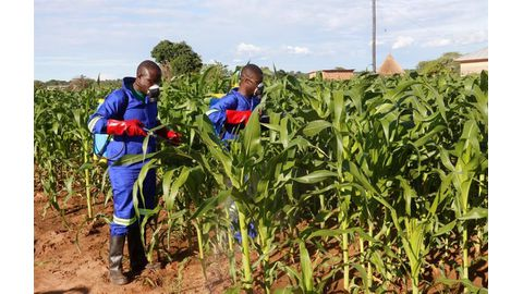Managing fall armyworm