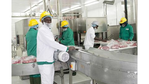 650 abattoir workers jobless
