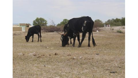 Drought a national disaster – farmers